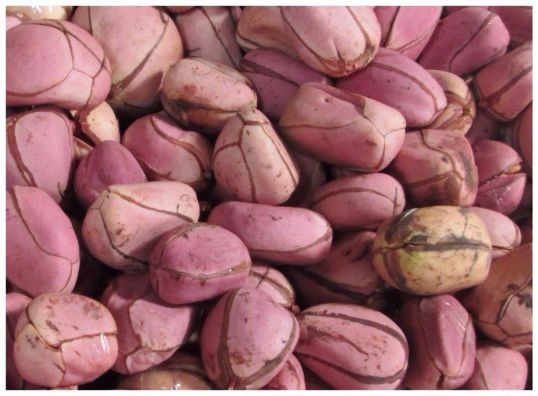 Kola Nut (Obi Abata) Uses and Benefits